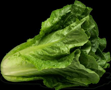 battle of the lettuce top 10 rankings