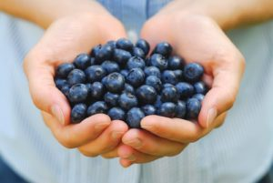 blueberries-in-hand-shutterstock_8400148